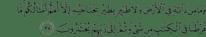 Quran 6_38