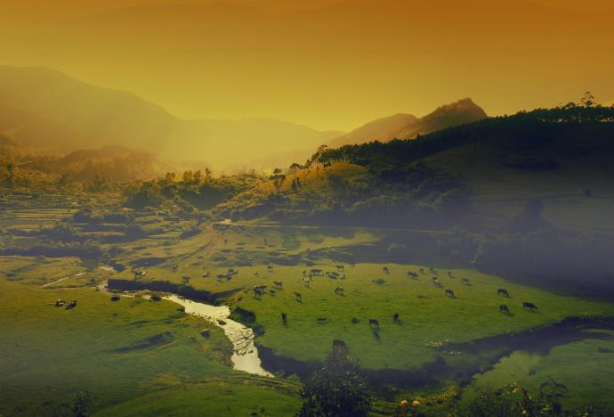 Ayurveda Trails