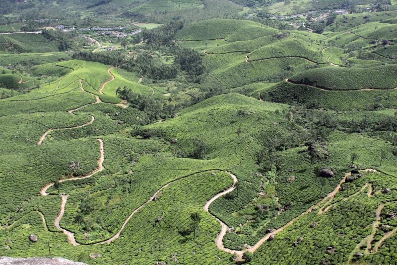Ecotones Trek, Kerala, Munnar, Chokramudi 2045m